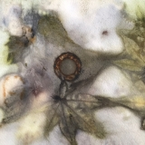 Eco Dyeing And Rust